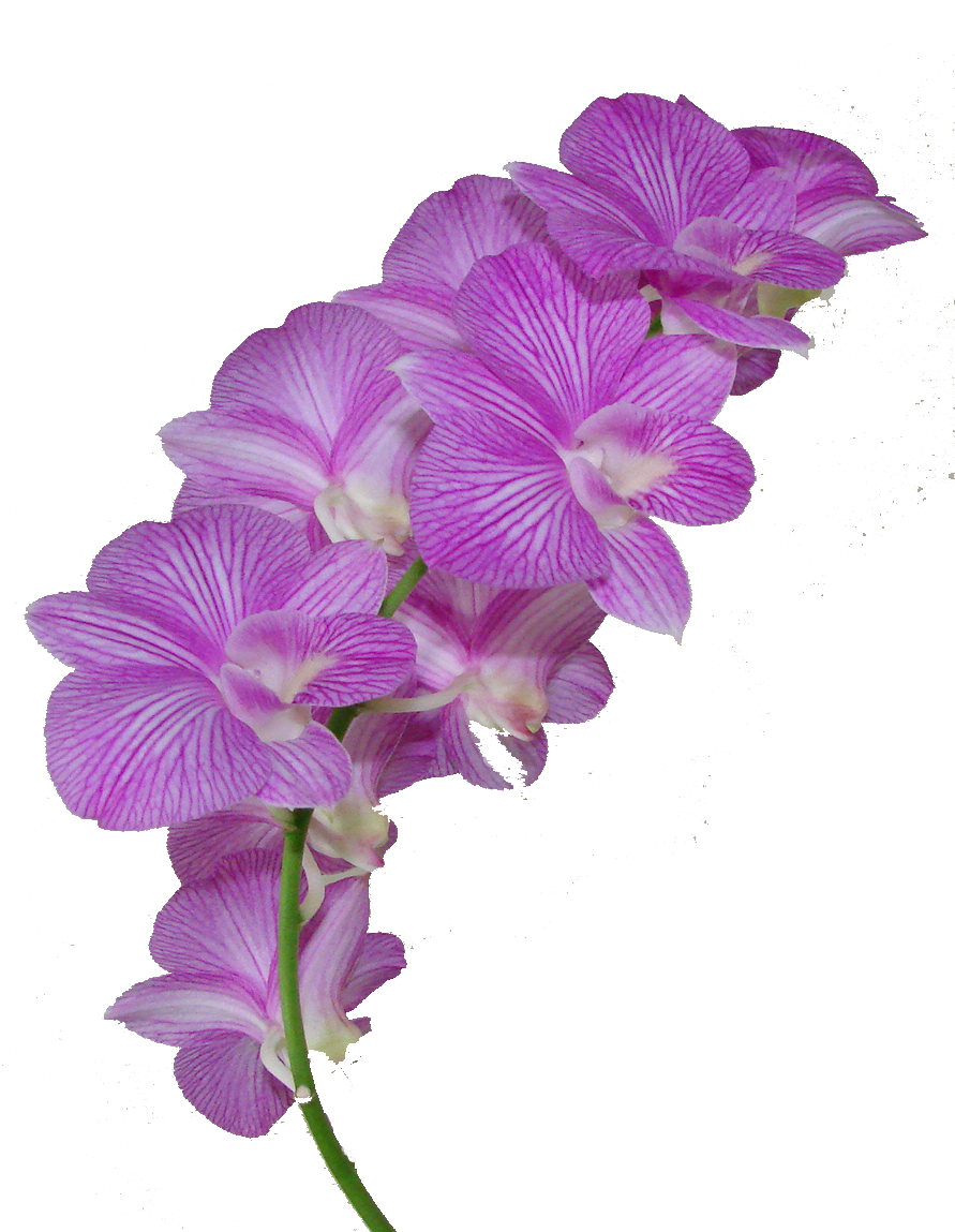 flower crown: NEW 138 PURPLE FLOWER CROWN PNG