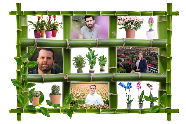 Webinar to address how to capitalise on the recent houseplant trend